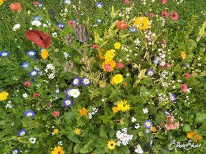 Blumenbeet in Sponheim.
