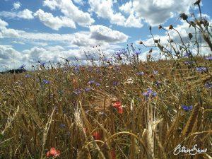 Blumenwiesen und Himmel.
