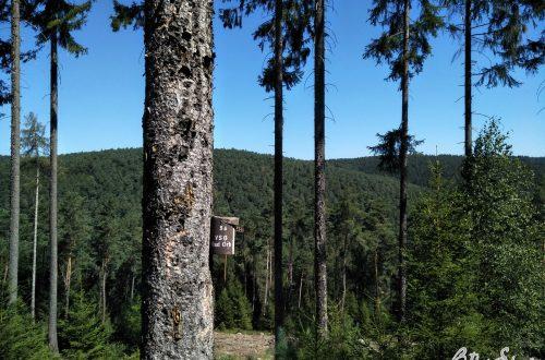 Vogelhäuschen im Fichtenwald hinter Bad Orb.