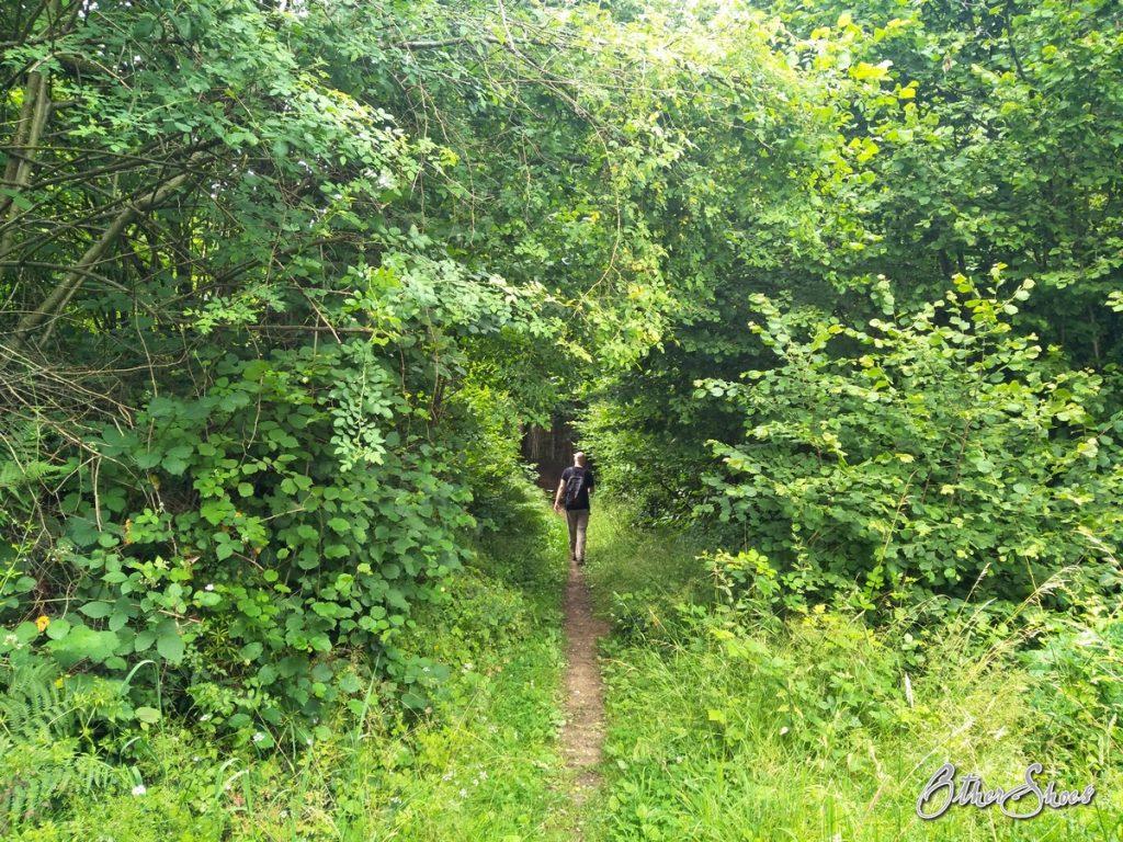 Hildegardweg 3. Etappe: Es grünt so grün die Grünkraft (Teil 3/9)