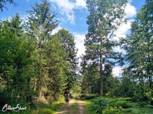 Auf breiten Waldwegen geht es nach oben auf die Höhe.