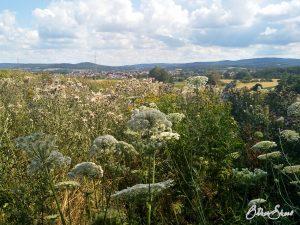 Summende Blumenwiese mit Blick auf Somborn.