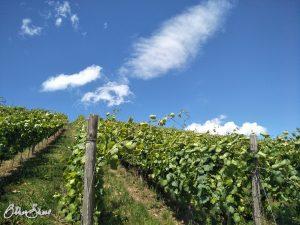 Jede Menge Weißwein vor Weiler bei Monzingen.