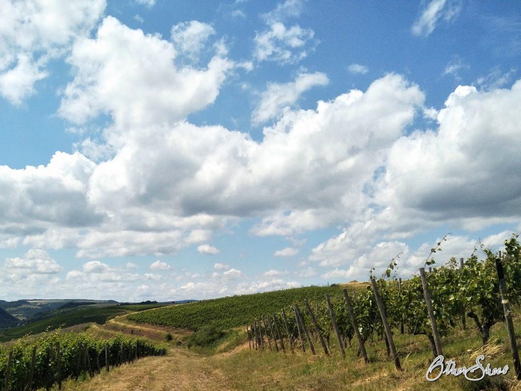 Wein, Wind und Weite.
