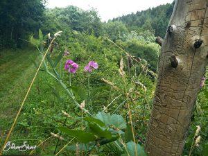 Im Wald vor Dalberg.