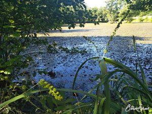 Namenloser Weiher mit vielen Libellen.