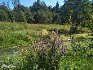 Tümpel und Blumen im Wald.