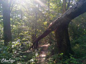 Zum Ende der Spessartfährte in Horbach geht es noch einmal zurück in den Wald.