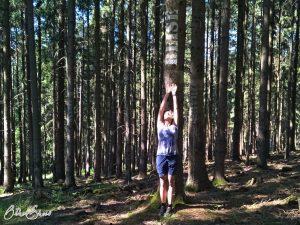 Waldkunst am Spessartbogen: Reise!
