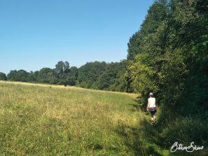 Wiesenweg durch das Naturschutzgebiet Weinberg bei Hohenzell.